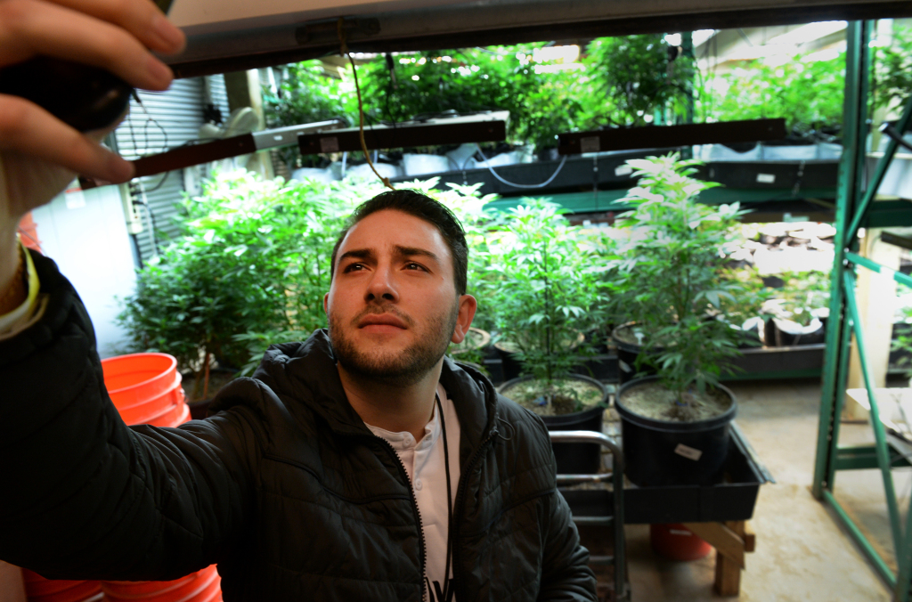 """""""We don't exactly know what to do with it"""": Marijuana tourism still confounds legalized states"""